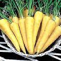 Желтой моркови